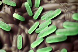 Сальмонеллез: симптомы, лечение и профилактика заражения