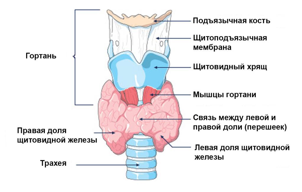 Грибковые болезни у рыб лечение