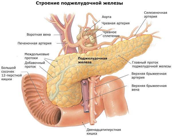Острый панкреатит: симптомы, диагностика и первая помощь