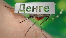 Лихорадка денге: симптомы, лечение и профилактика. Советы туристам
