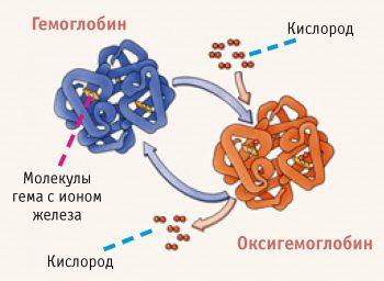 Препараты для повышения гемоглобина в крови: обзор средств
