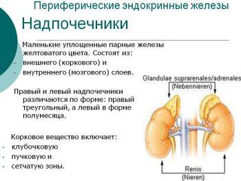 Гормонально-активные опухоли надпочечников: альдостерома, феохромоцитома