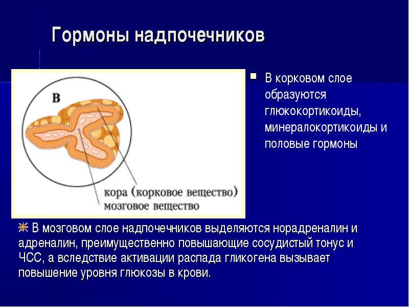 глюкокортикоидные гормоны препараты список