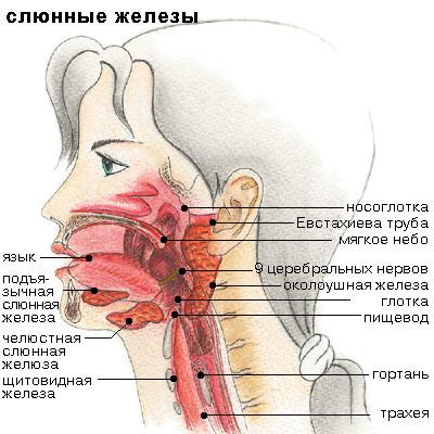 хвороба шегрена фото