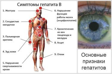 Стадия декомпенсации цирроза печени сколько живут