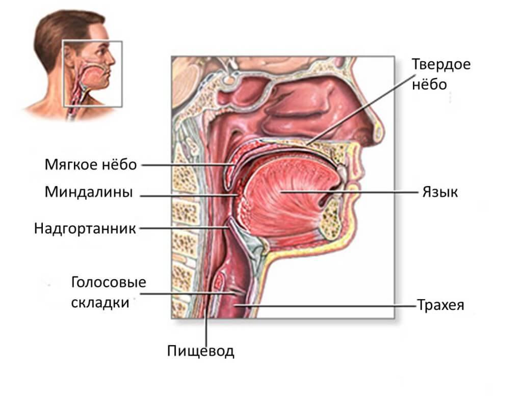 Зао стоматологическая поликлиника 9 новосибирск