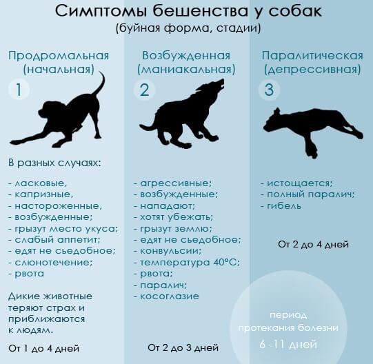 Какие болезни бывают у животных и как их лечить