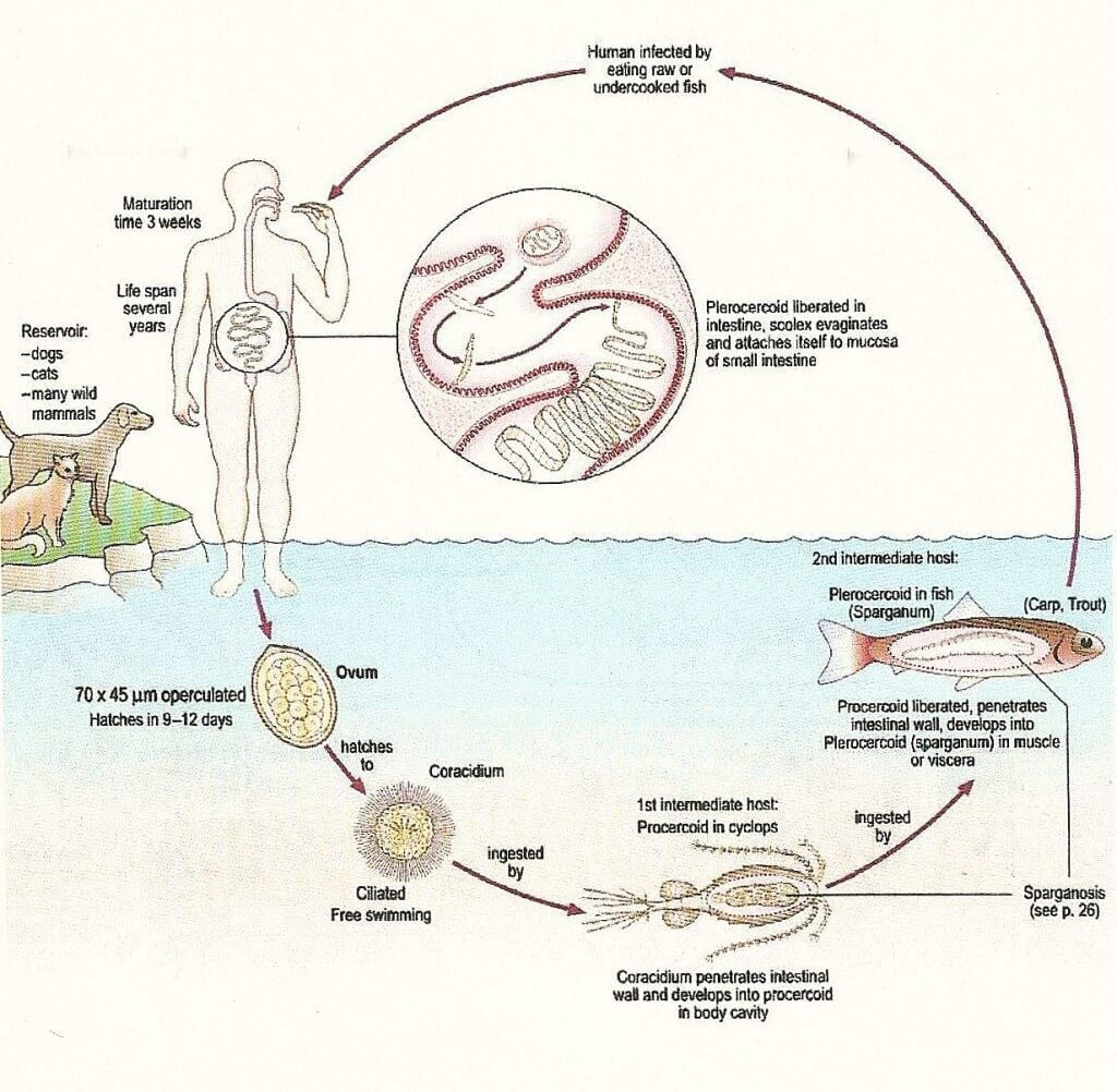 как паразиты выходят из человека