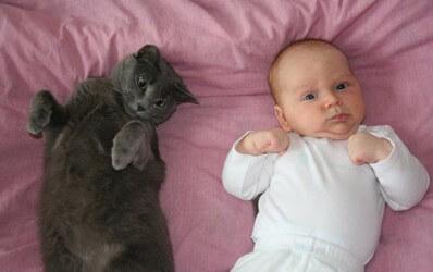 Болезнь кошачьей царапины