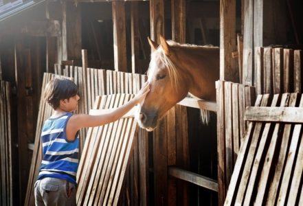 мальчик с лошадкой