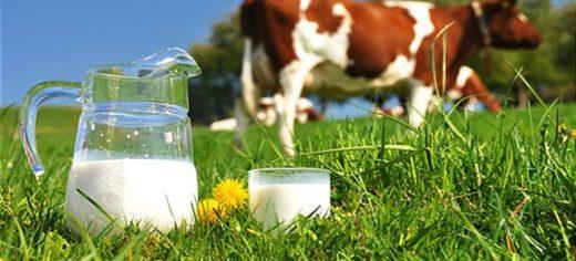 молоко и корова