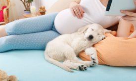 Беременная рядом с собакой держится за живот