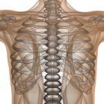Травмы грудной клетки, переломы грудины и ребер: симптомы, первая помощь