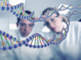 генетики смотрят на макет ДНК