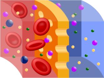 плазмаферез мембрана
