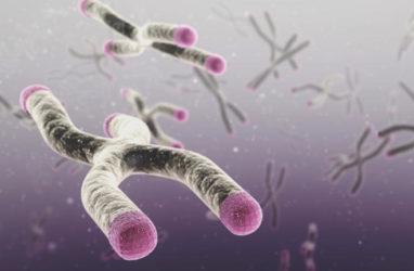 Хромосомы, теломеры