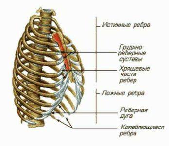 Симптомы перелома ребра — topmedialine.ru