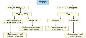 тиреотропный гормон гипофиза