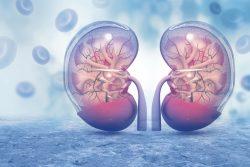 Биопсия почек: зачем и как проводится