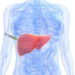 Биопсия печени: как делают, показания