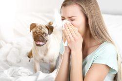 Как победить аллергию в домашних условиях