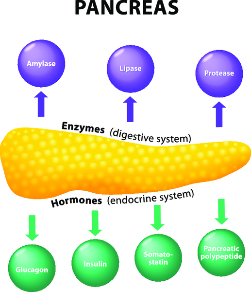 Какие ферменты помогут при панкреатите — что лучше выбрать?