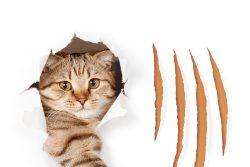 Болезнь кошачьих царапин: симптомы и лечение