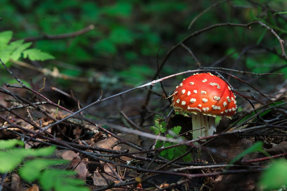 Этапы первой помощи при отравлении ядовитыми грибами