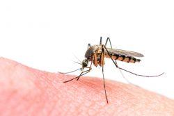 Малярия – симптомы, лечение и профилактика