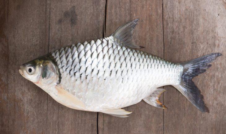 Обработка ножа для разделки рыбы описторхоз boker b048 ножи официальный сайт