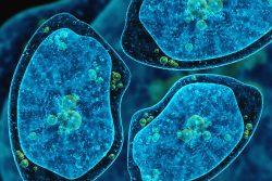 Амебный абсцесс печени: почему возникает и как его лечить