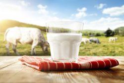Чем можно заразиться от молока?