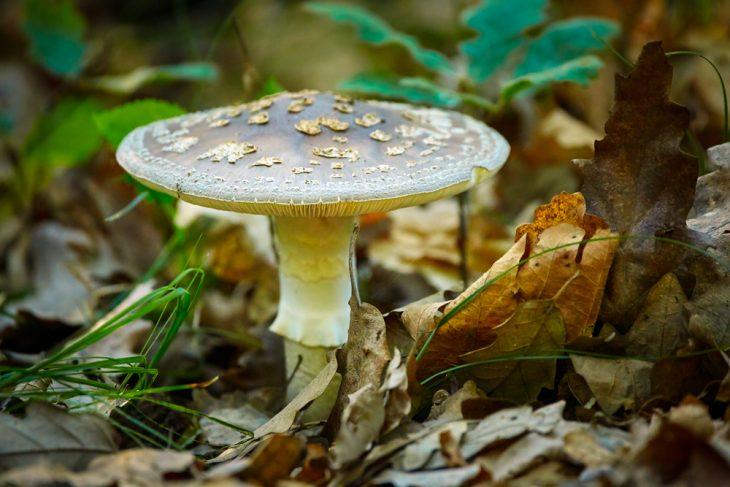 Первая помощь при отравлении грибами в домашних условиях