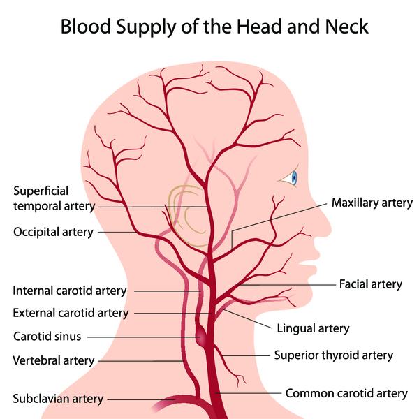 Описание препаратов для улучшения кровообращения головного мозга