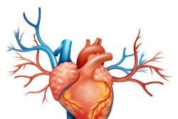 Гипертрофия левого желудочка: причины, лечение и последствия