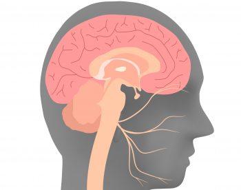 сидальческий нерв где находится фото