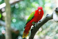 Чем можно заразиться от птиц?
