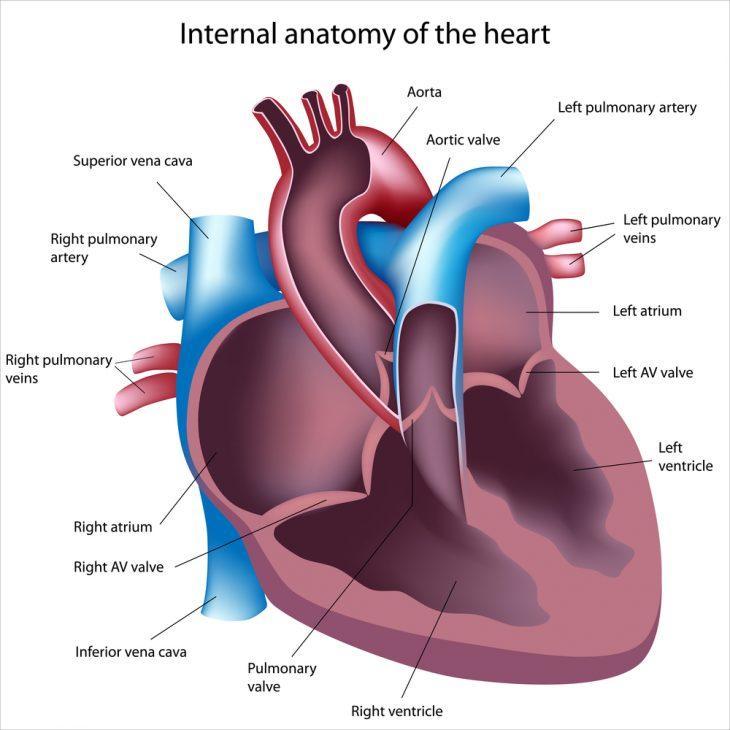 Расширение правого желудочка сердца в поперечнике что это значит