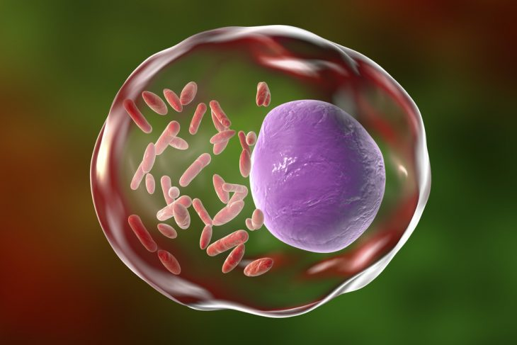 Болезнь Брилля: эпидемиология, симптомы, принципы лечения