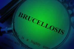 Анализы на бруцеллез, лечение бруцеллеза у человека