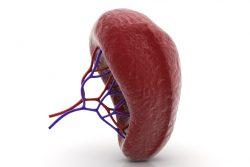 Инфаркт селезенки: причины, симптомы, принципы лечения