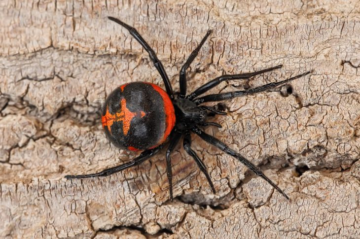 Укус паука - фото, симптомы, что делать при укусе пауков