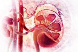 Инфаркт почки: симптомы, лечение