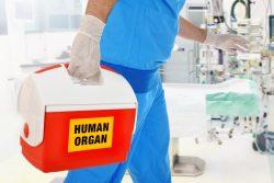 Реакция отторжения трансплантата: почему возникает и как ее устранить