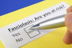 Фасциолез человека: пути заражения, проявления, лечение, профилактика