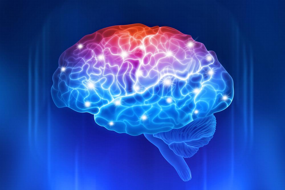 картинка мозга человека картинки многолетние