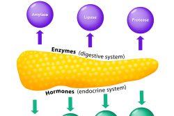 Гормоны, выделяемые поджелудочной железой: роль в организме