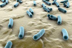 Туберкулез кишечника: симптомы, принципы лечения