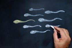 Астеноспермия: почему возникает, как проявляется, как выявляется и лечится