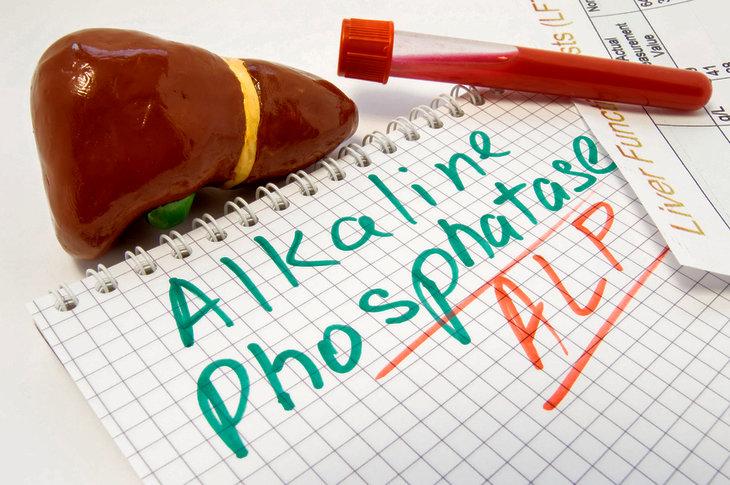 Анализ крови на щелочную фосфатазу